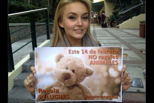 peluches-angelique-boyer